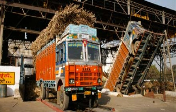INDIAN SUGAR PRODUCTION MAY 31.5 MILLION TONS: PRICE AT 9 YEARS LOW