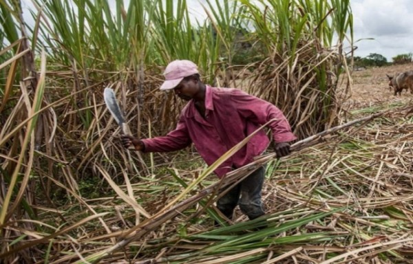 HIGHER SUGAR PRICES PROSPECTS OVER THE COMING MONTHS AND YEARS
