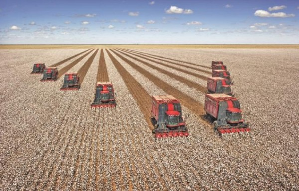 THE BRAZILIAN AND DALIAN RALLY IN TURN SUPPORTED US SOYBEANS