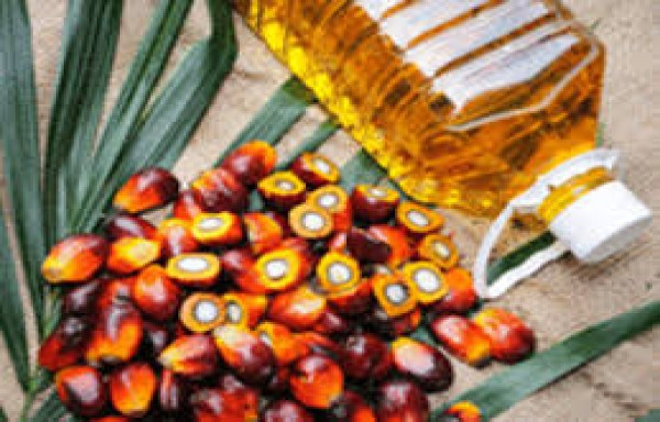 PALM OIL PRICES MAY GRADUALLY DECLINE UNDER SUPPER PRODUCTION CYCLE