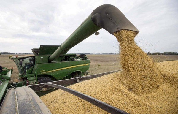 STRONG CHINESE DEMAND DRIVE SOYBEAN SOARED TO 7 MONTH HIGH