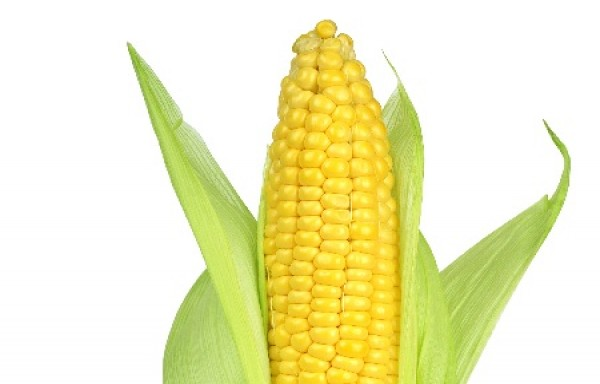 CHINA MADE A BIG PURCHASE OF US CORN PRICE POP UP