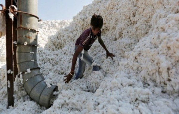 VICTIMS OF THE GLOBAL PANDEMIC COTTON IS READY TO BOTTOM OUT