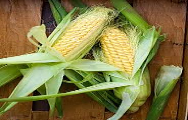CBOT CORN FUTURES AT $5.57 A NEW HIGH AFTER JUNE 2013
