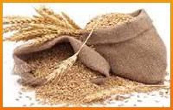 ઘઉંની સપ્લાય ચેઈન ભાંગી પડતા શિકાગો વાયદો ૧૫ ટકા ઉછળ્યો