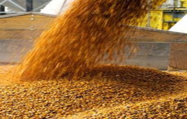 LOWER US NEW CORN CROP & CHINA IMPORT MORE: DRIVING PRICES HIGHER