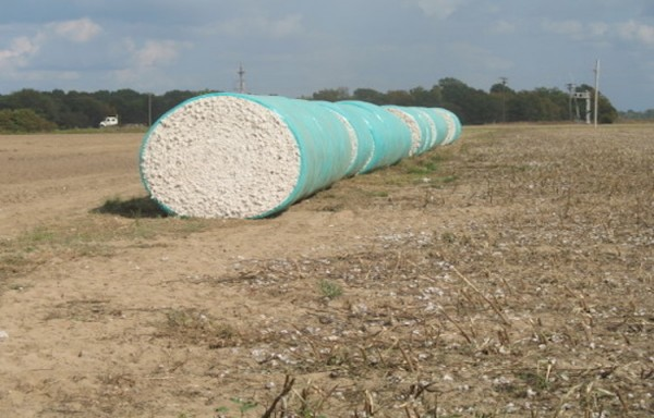 INDIAN COTTON MORE COMPETITIVE DUE TO CHIPPER RUPEE