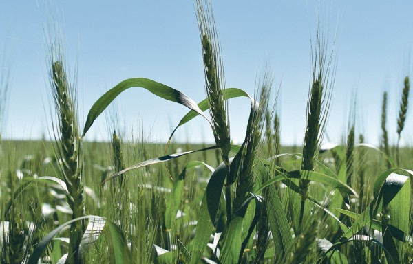 RUSSIA IS RUNNING OUT OF EXPORTABLE WHEAT GOOD NEWS FOR INDIA