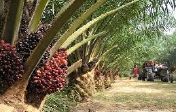 B30 HAD BEEN A GAME CHANGER: RED HOT SENTIMENT IN THE PALM-OIL