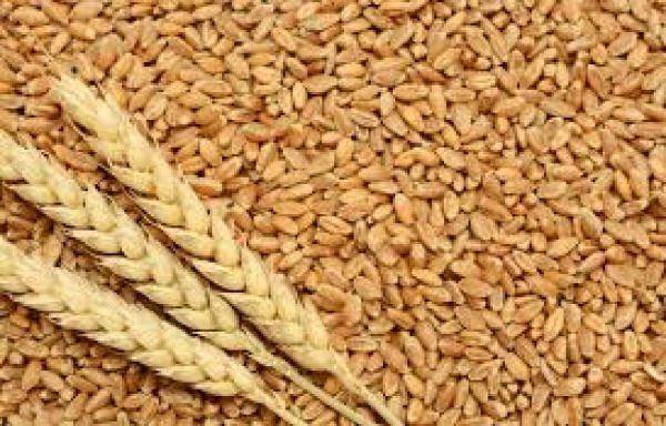TREAD WAR BETWEEN US AND RUSSIA IN WHEAT MARKET: RALLY CAN'T SURVIVE