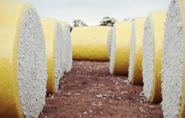 USDA REVISED DOWN PROJECTIONS FOR COTTON PRODUCTION PRICES RALLIED